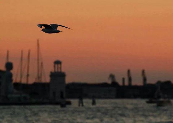 gabbiano al tramonto su venezia