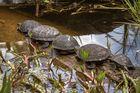 Gänse- äh - Schildkrötenmarsch? Wildpark Bad Mergentheim