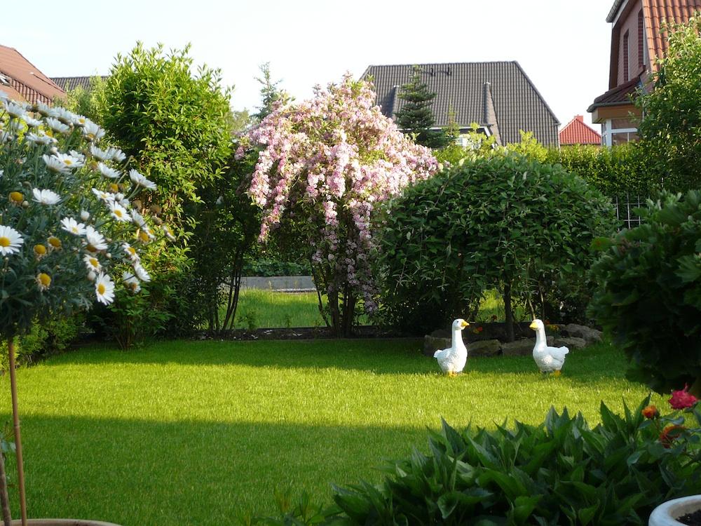 Gänse im Garten