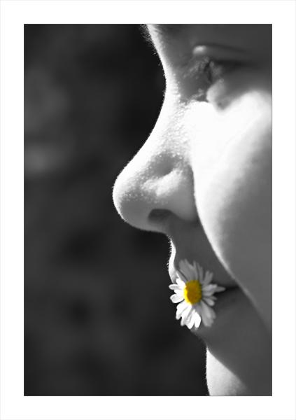 *Gänseblümchen
