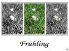 Gänseblümchen Collage