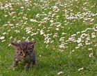 Gänseblümchen und Mini-Miez