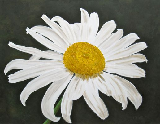 Gänseblümchenmacro 89 x 118 cm