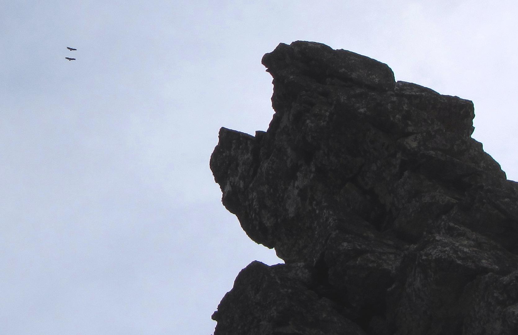 Gänsegeier am Salto del Gitano