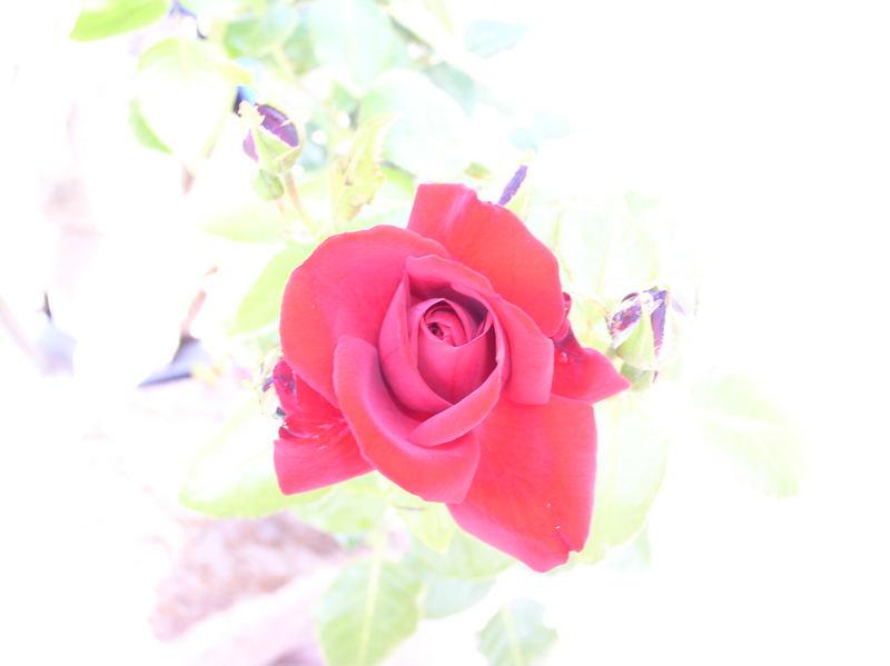 -Gärtnerliebe-