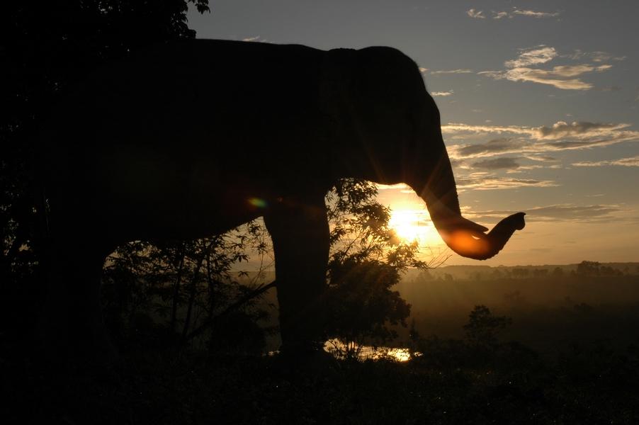 Gajah Seblat