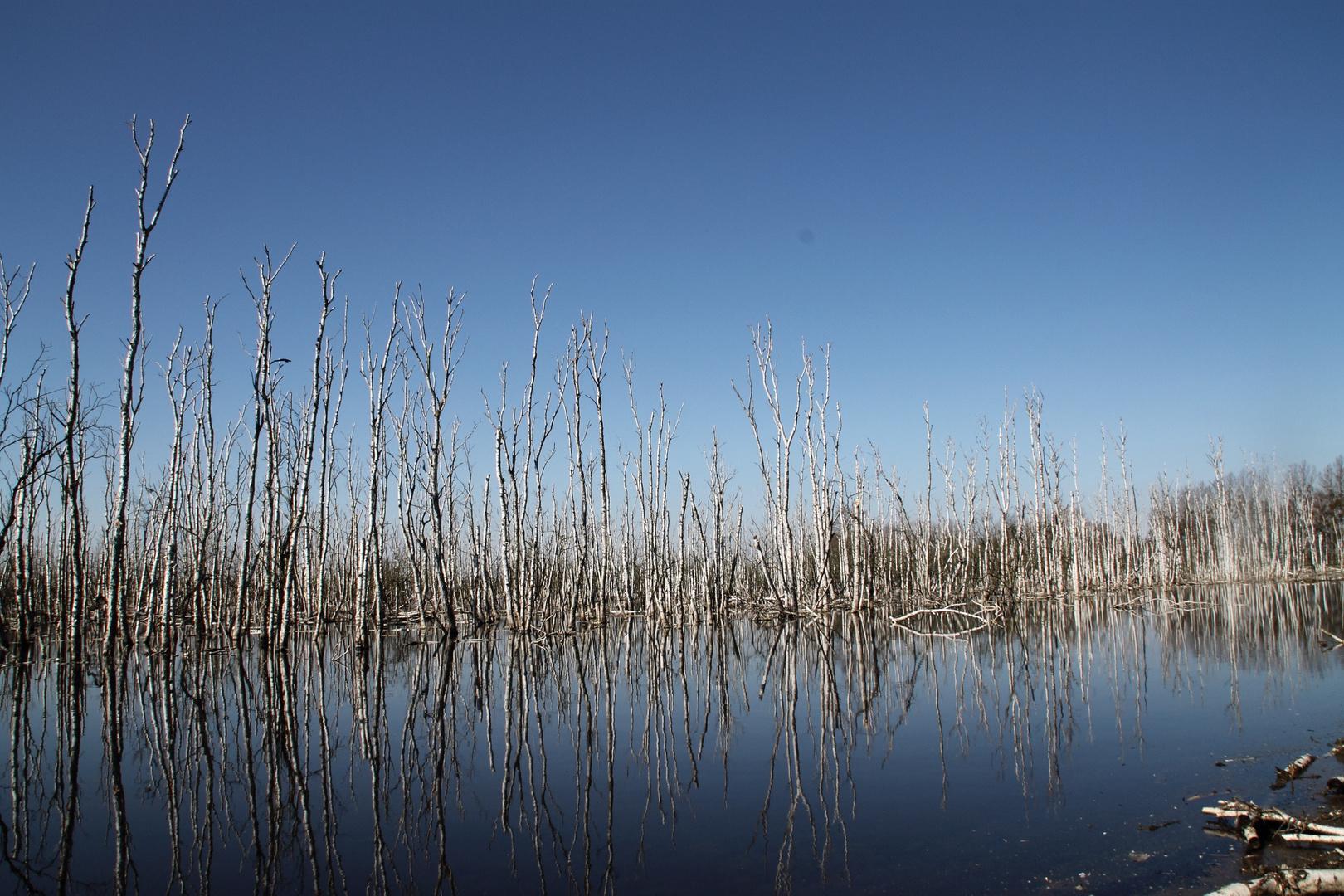 Galenbecker See-Vernässungszone