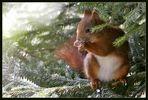 Galerie-Hörnchen in der Eifel gesichtet!