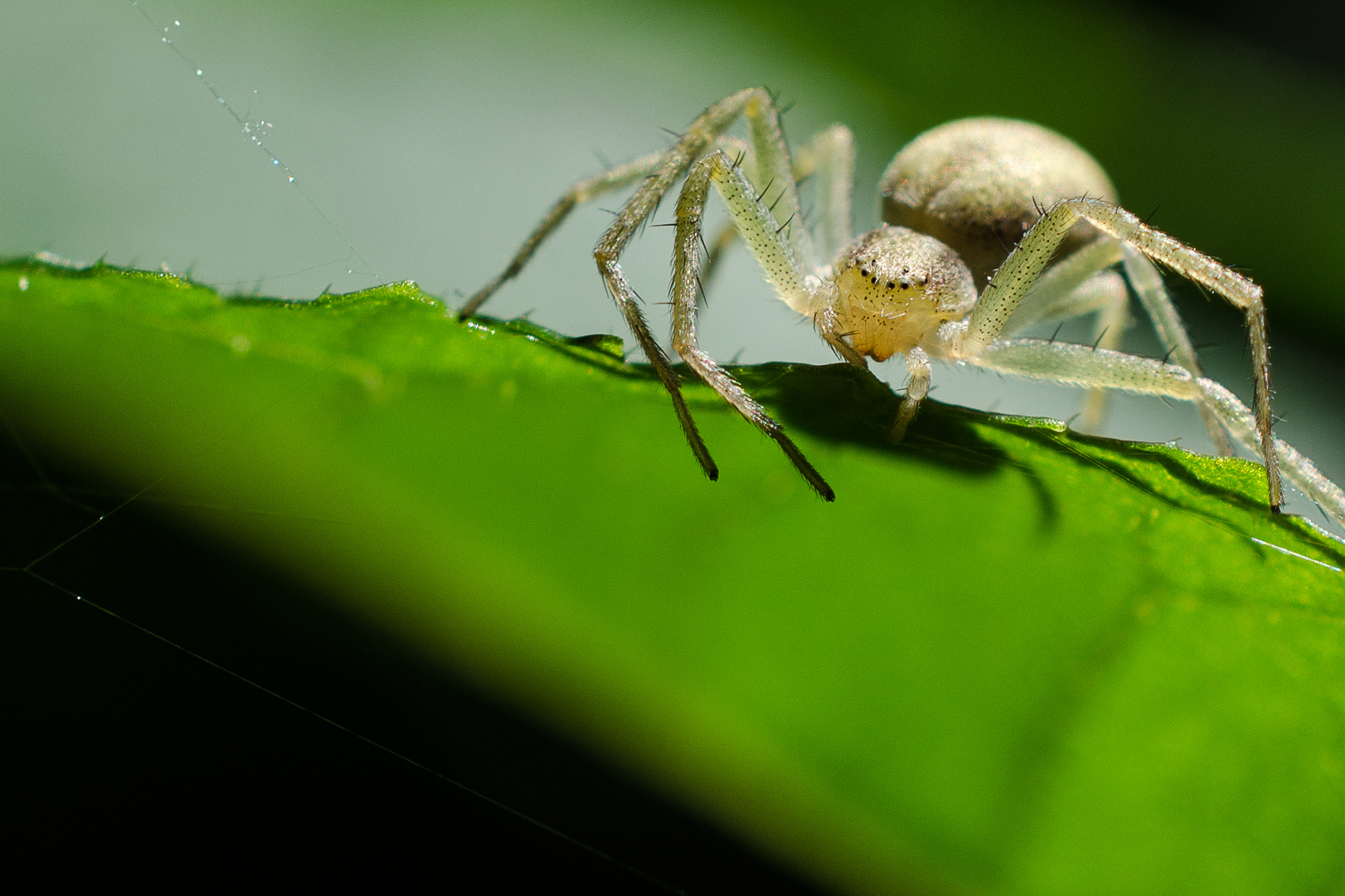 Galgenberg Spinne im Gegenlicht