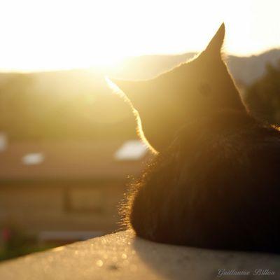Galia au coucher du soleil