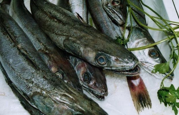 Galicische Fischtheke