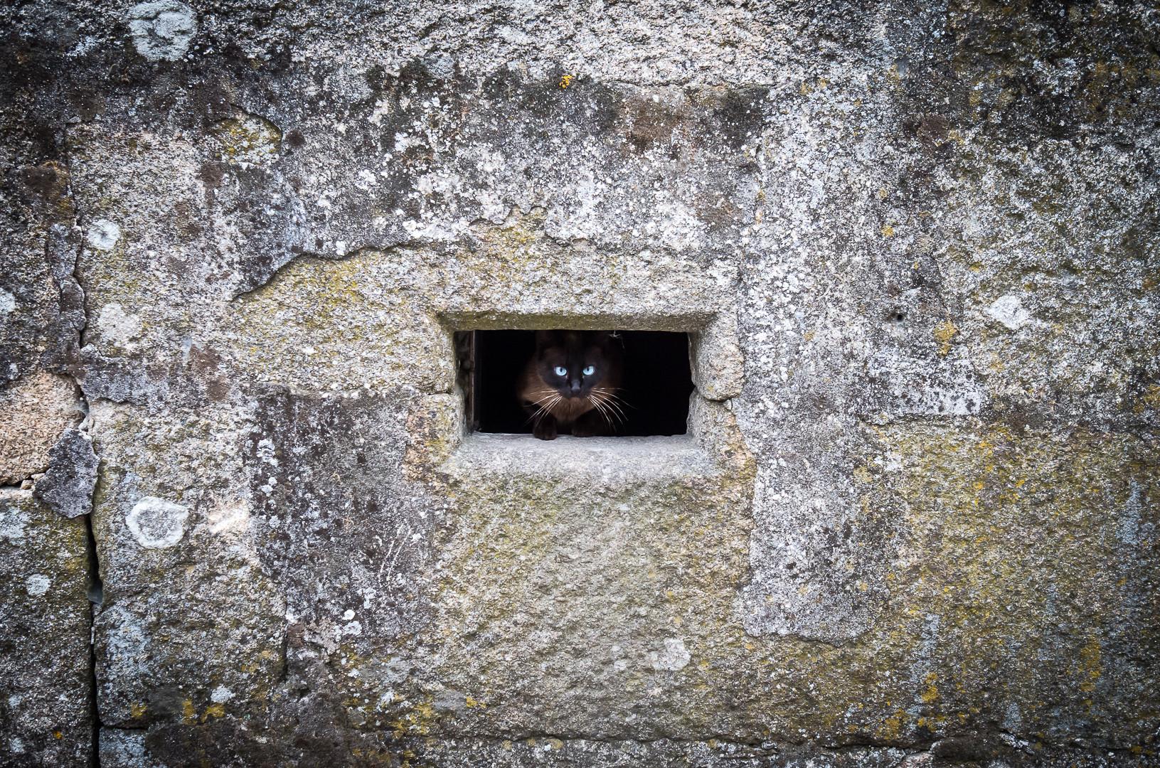 Galizische Katze