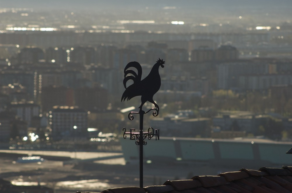 Gallo da Parco Europa Torino