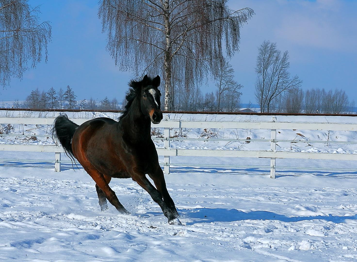 Galopp im Schnee....