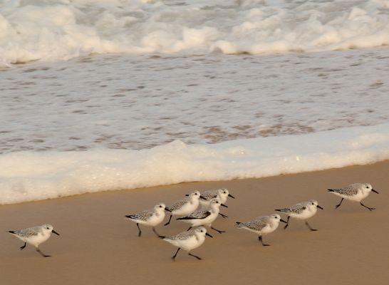 GAmbader sur la plage !