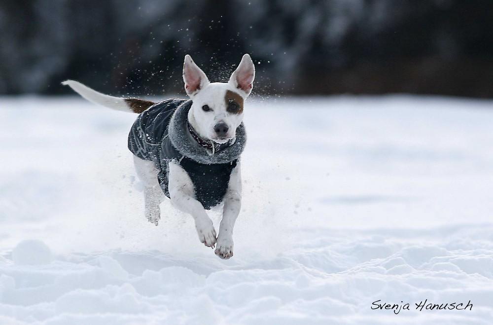 Gangster im Schnee ...