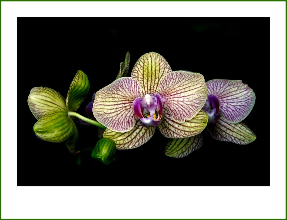 Ganz einfach: Orchideen