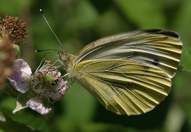 Ganz einfach Schmetterling