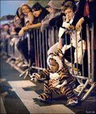 Ganz gefährlicher Tiger
