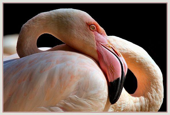 Ganz in Pink - Tout en rose