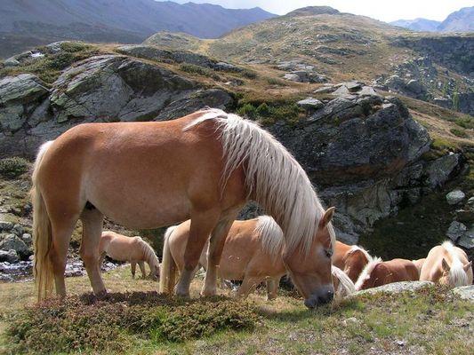 ganz oben in Südtirol