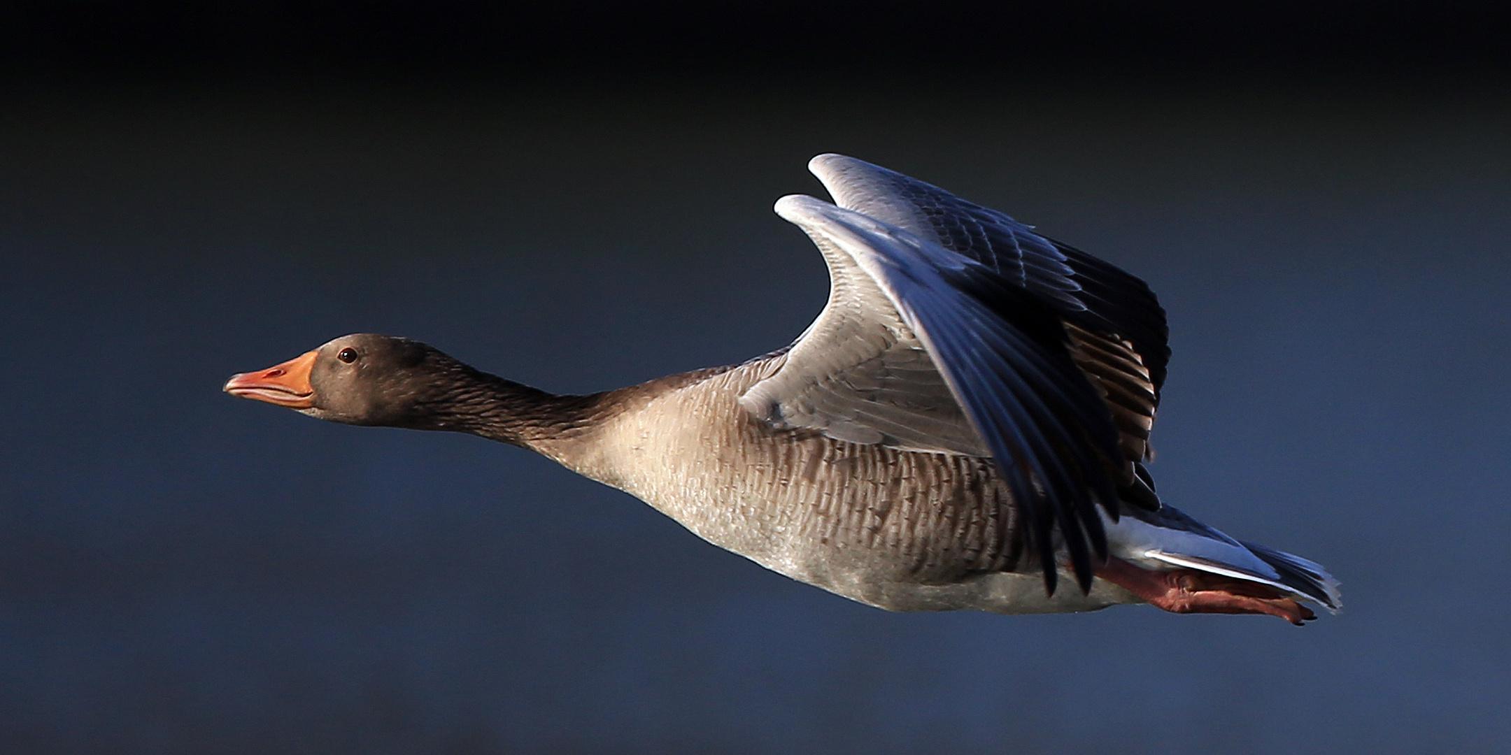 Ganz schön großer Vogel