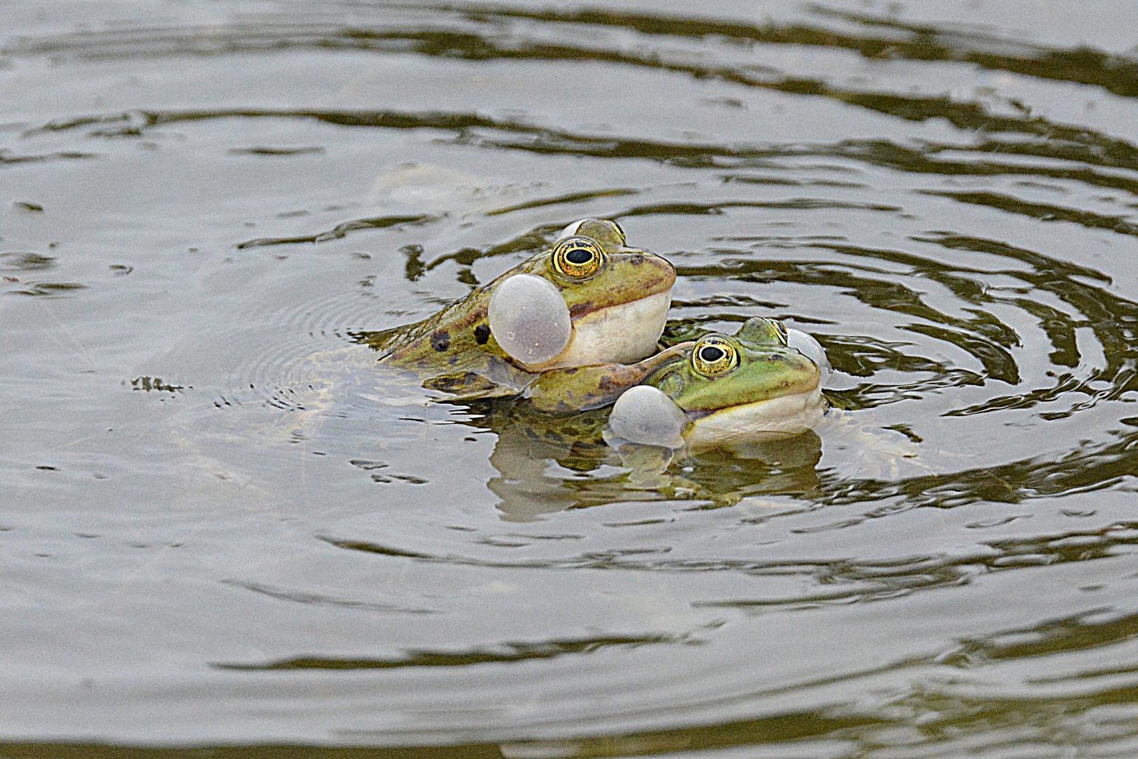 """""""Ganz schön was los im Ökologisch - Botanischen Garten in Bayreuth :-)"""""""