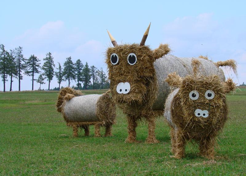 Ganz spezielle Kühe *grins