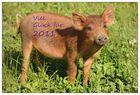 """ganz viel """"Schwein""""..."""