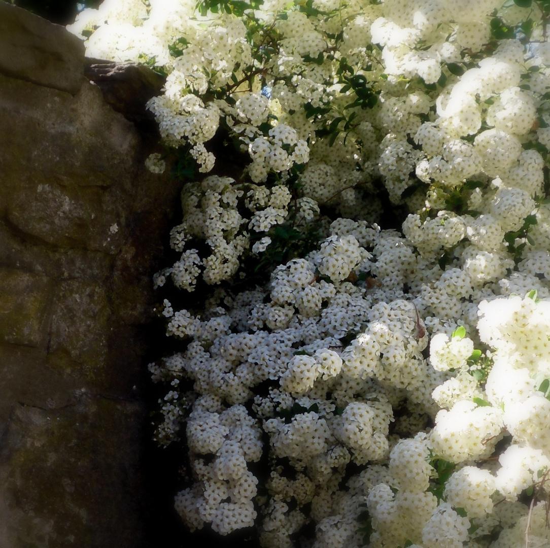 Ganz viele kleine Mittwochsblümchen