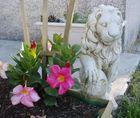 Gardenia monte la garde