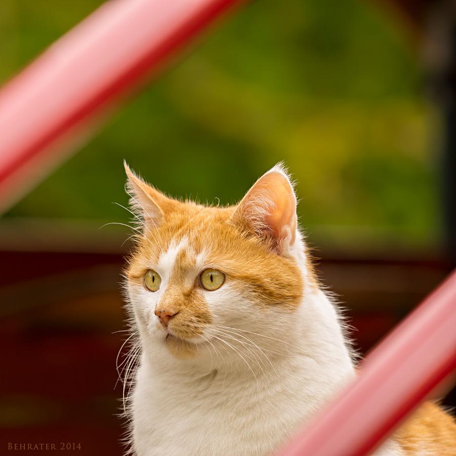 Garfield auf dem Spielplatz