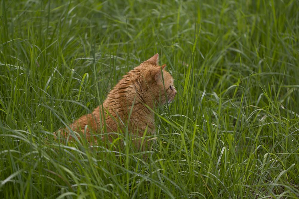 Garfield auf der Lauer
