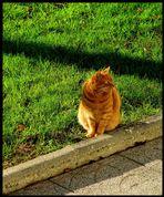Garfield !
