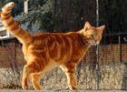 Garfield...