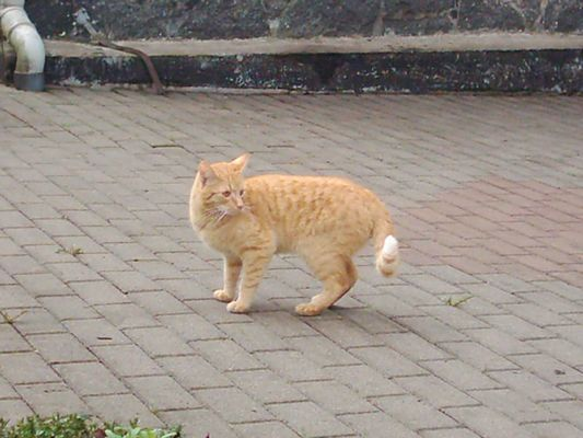 Garfield in Dünn