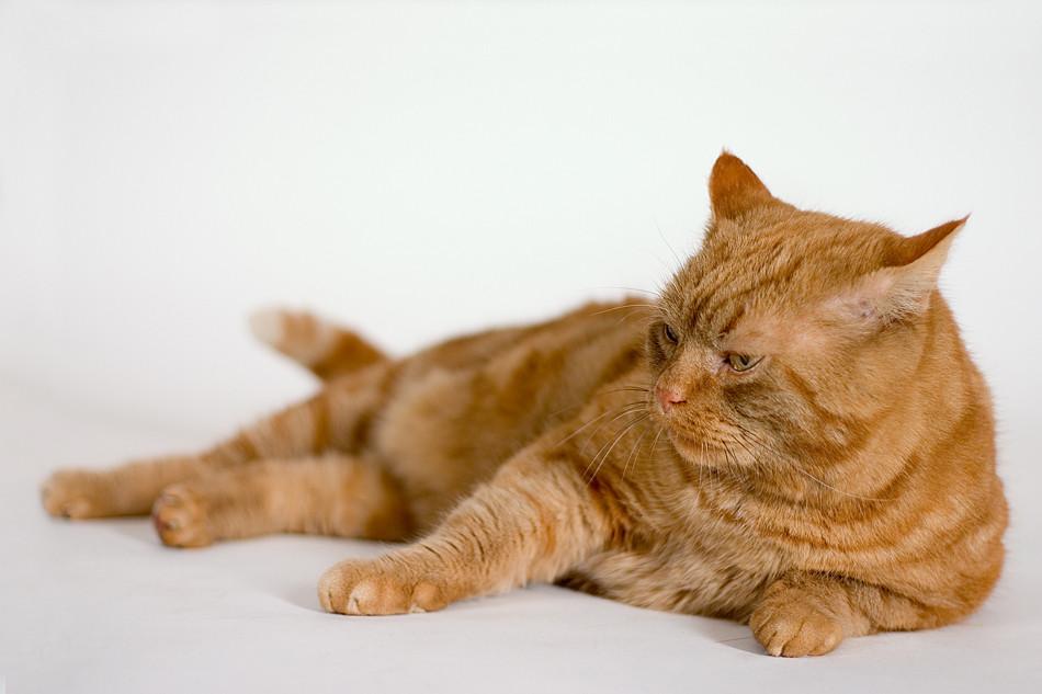 Garfield - Klappe die Zweite
