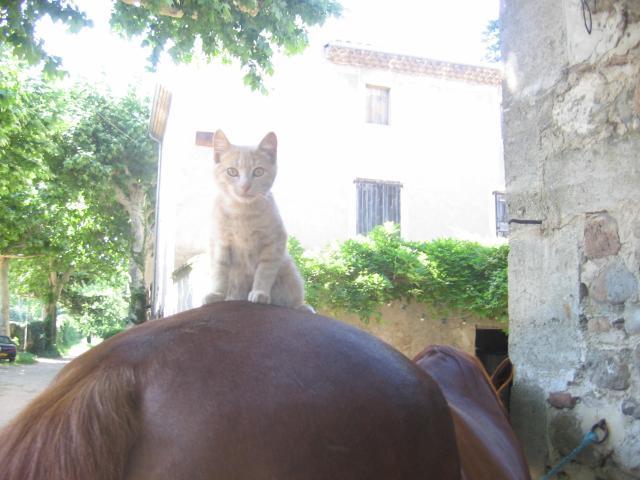 Garfield sur Dès l'aube