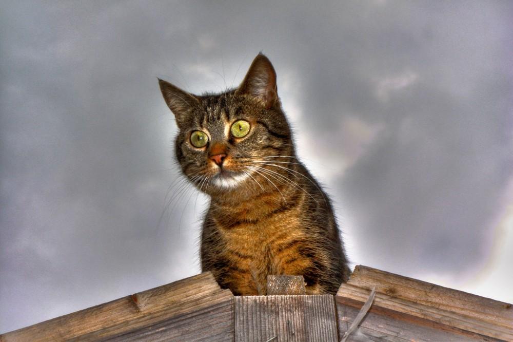 Gargouille le chat