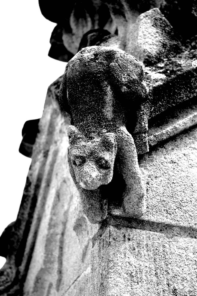 Gargouille palais des papes Avignon (France)