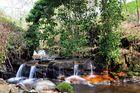 Garrel Glen,Kilsyth,Scotland