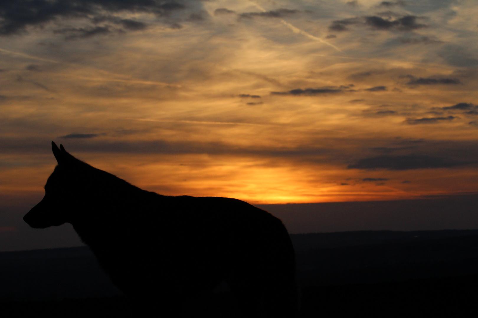 Garry im Sonnenuntergang