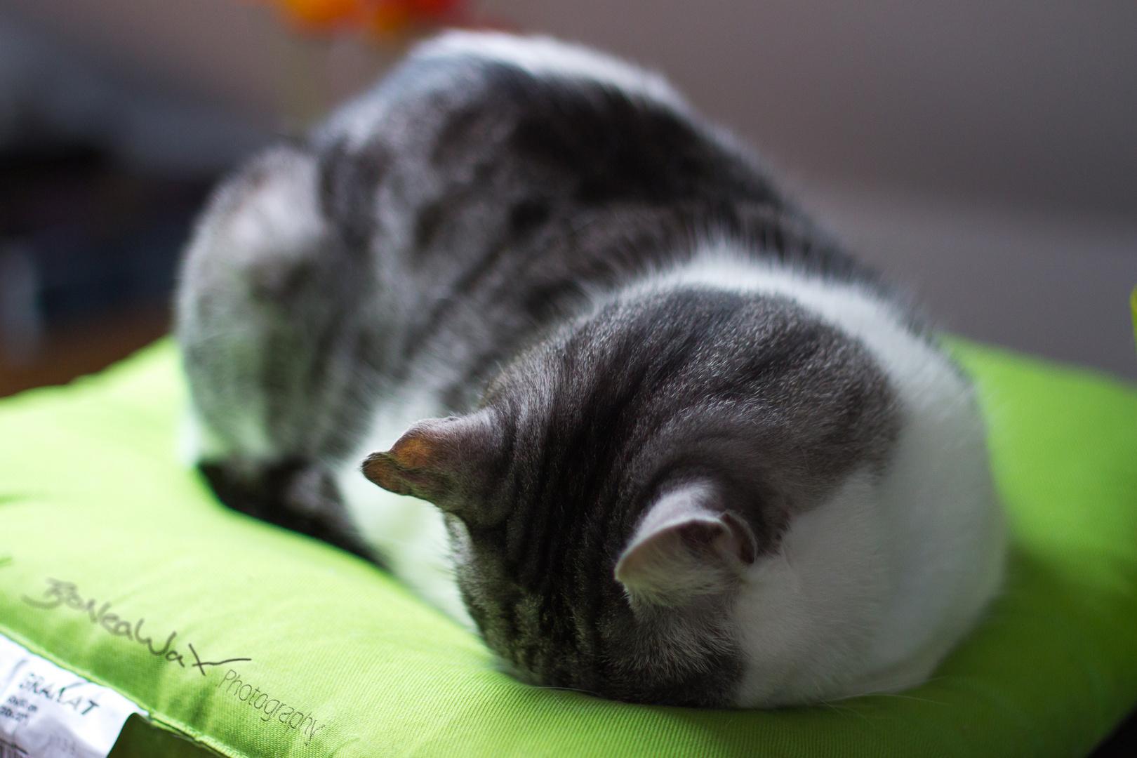 Garry schläft
