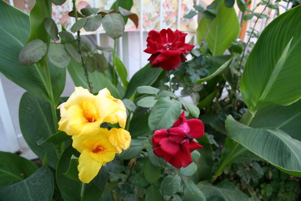 Garten Blumen