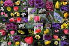 Garten - Collage