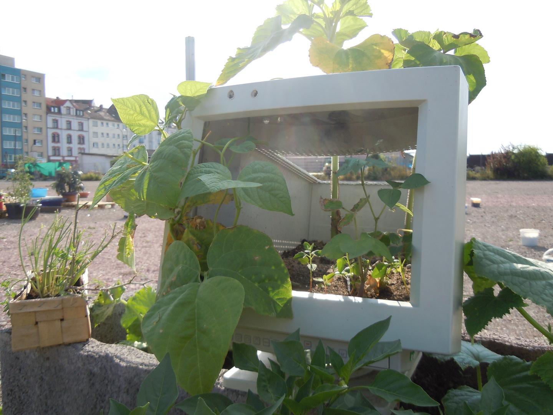 Garten der Großstadt...