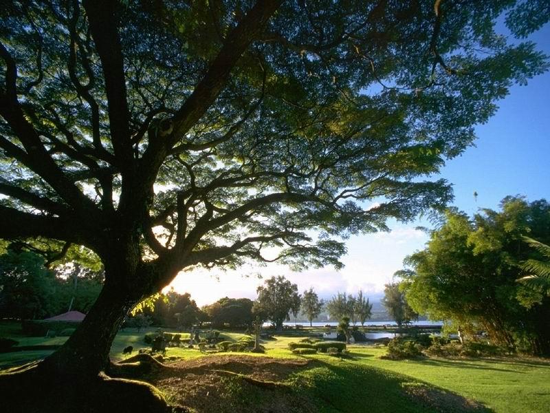 Garten der Königin Lilioukalani, The Big Island, Hawaii