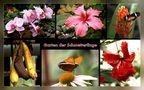 Garten der Schmetterlinge by Klatt Arno