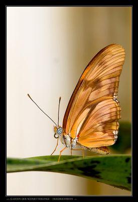 .::::. Garten der Schmetterlinge - Friedrichsruh .::.