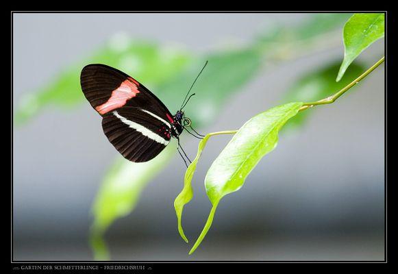 .:::. Garten der Schmetterlinge - Friedrichsruh .::.
